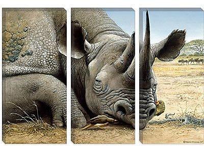 iCanvas 'Black Rhino' by Harro Maass Graphic Art on Canvas; 12'' H x 18'' W x 1.5'' D