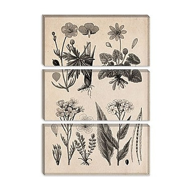 iCanvas 'New British Herbal Sketch' Graphic Art on Canvas; 26'' H x 18'' W x 1.5'' D