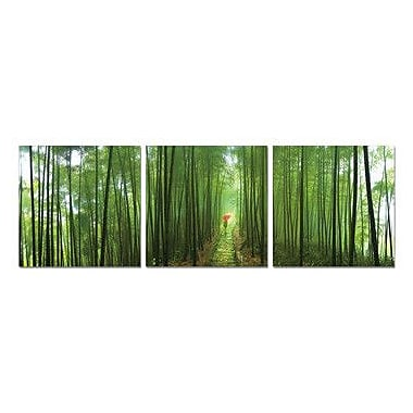 Artistic Bliss Bamboo Path 3 Piece Framed Photographic Print Set
