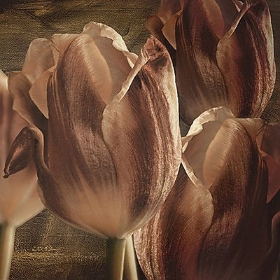 iCanvas ''Copper Tulips'' by Mindy Sommers Graphic Art on Canvas; 12'' H x 12'' W x 0.75'' D