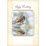 Cartes de souhaits, Joyeux anniversaire, oiseau, 18/paquet