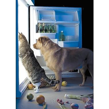 Cartes de souhaits, vierges, chien et chat, 18/paquet
