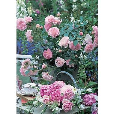 Cartes de souhaits, vierges, fleurs roses, 18/paquet