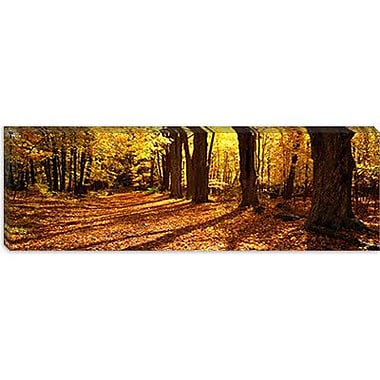 iCanvas Panoramic Tree Lined Road, Massachusetts Photographic Print on Wrapped Canvas