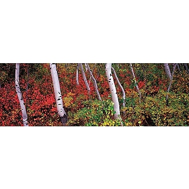 iCanvas Panoramic Trees in a Forest Photographic Print on Wrapped Canvas; 20'' H x 60'' W x 0.75'' D