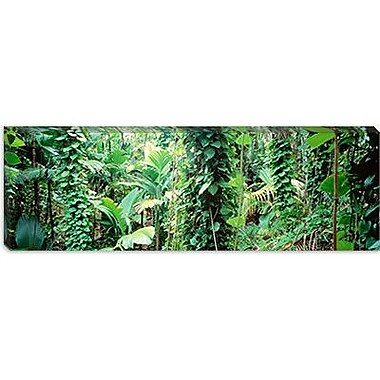 iCanvas Panoramic Vegetation Seychelles Photographic Print on Canvas; 12'' H x 36'' W x 1.5'' D