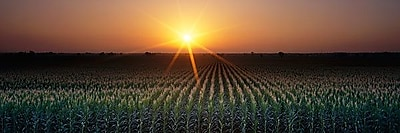 iCanvas Panoramic Sunrise, Crops, Farm, Sacramento, California Photographic Print on Wrapped Canvas