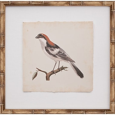 Mirror Image Home Mini De Langlois Bird I Framed Graphic Art