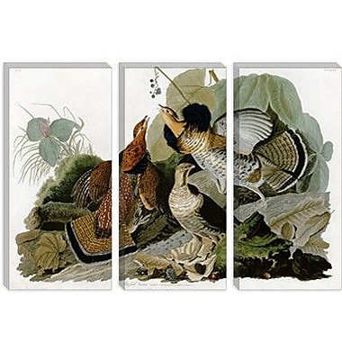 iCanvas 'Ruffed Grouse' by John James Audubon Graphic Art on Canvas; 26'' H x 40'' W x 1.5'' D