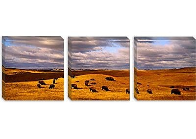 iCanvas Panoramic Buffaloes Grazing, North Dakota Photographic Print on Canvas