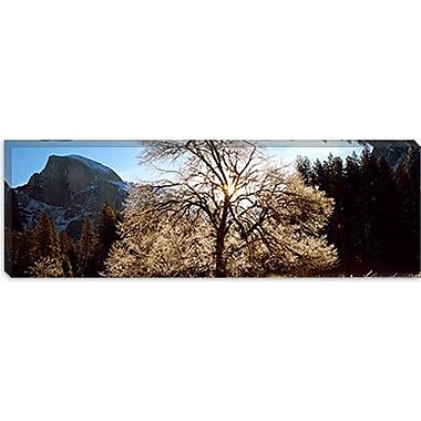 iCanvas Panoramic 'Yosemite National Park, California' Photographic Print on Canvas