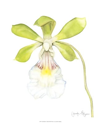 Evive Designs Orchid Beauty I by Jennifer Goldberger Painting Print