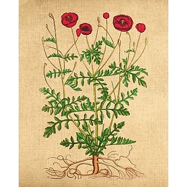 Evive Designs Poppies Vintage Style by Evie Alessandria Painting Print