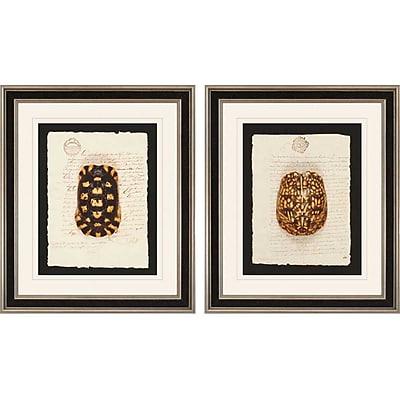 Paragon Tortoise by Burney 2 Piece Framed Graphic Art Set