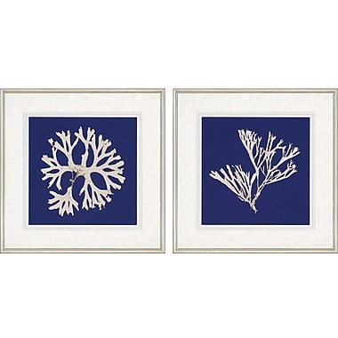 Paragon Seaweed I Giclee by Anonymous 2 Piece Framed Graphic Art Set (Set of 2)