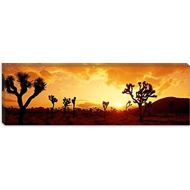 iCanvas Panoramic Sunset, Joshua Tree Park, California Photographic Print on Wrapped Canvas
