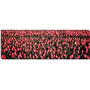 iCanvas Panoramic Tulips, Noordbeemster, Netherlands Photographic Print on Wrapped Canvas
