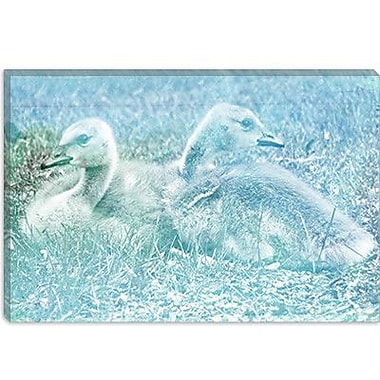 iCanvas Canadian Baby Geese #3 Graphic Art on Canvas; 26'' H x 40'' W x 0.75'' D