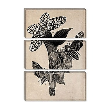 iCanvas Butterflies Scientific Drawing Graphic Art on Canvas; 18'' H x 12'' W x 0.75'' D