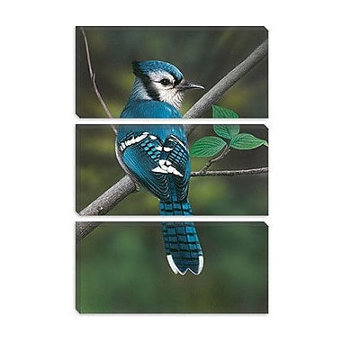 iCanvas 'Blue Jay' by Clarence Stewart Photographic Print on Canvas; 18'' H x 12'' W x 1.5'' D
