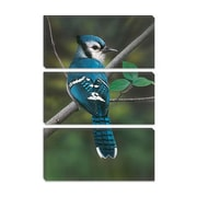 iCanvas 'Blue Jay' by Clarence Stewart Photographic Print on Canvas; 40'' H x 26'' W x 0.75'' D