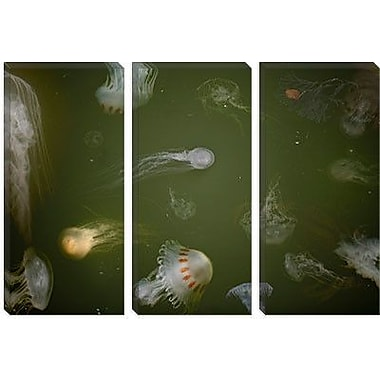 iCanvas 'Medusae' by Geoffrey Ansel Agrons Photographic Print on Canvas; 26'' H x 40'' W x 0.75'' D