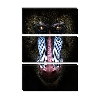 iCanvas SD Smart 'Mandrill' Photographic Print on Canvas; 26'' H x 18'' W x 0.75'' D