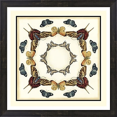 Evive Designs Butterfly Collector I by Chariklia Zarris Framed Graphic Art