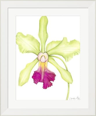 Evive Designs Orchid Beauty III by Jennifer Goldberger Framed Painting Print