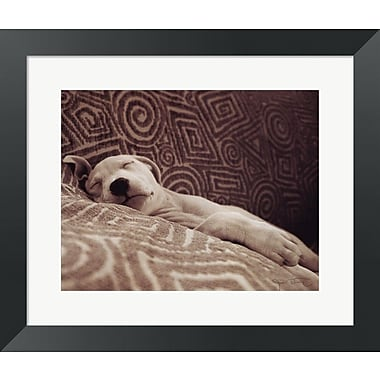 Evive Designs Dog Tired by Jim Dratfield Framed Photographic Print