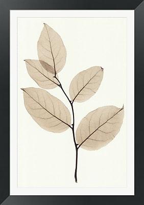 Evive Designs Salal by Steven N. Meyers Framed Photographic Print
