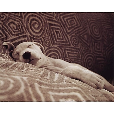 Evive Designs Dog Tired by Jim Dratfield Photographic Print