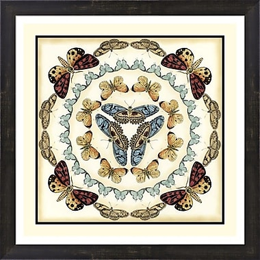 Evive Designs Butterfly Collector IV by Chariklia Zarris Framed Graphic Art