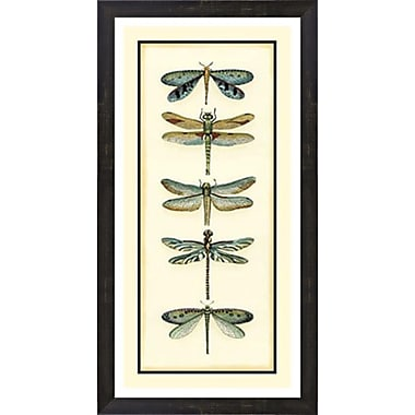 Evive Designs Dragonfly Collector I by Chariklia Zarris Framed Painting Print