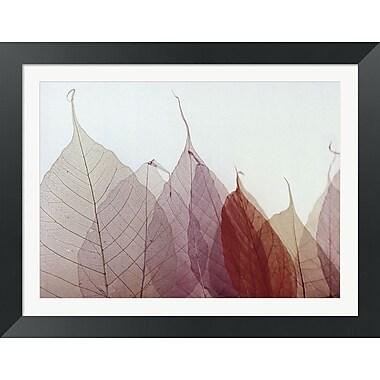 Evive Designs Cabernet by Durwood Zedd Framed Photographic Print