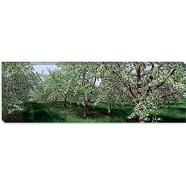iCanvas Panoramic View of Spring Blossoms on Cherry Trees Photographic Print on Wrapped Canvas