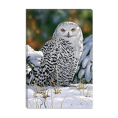 iCanvas ''Snowy Owl'' by William Vanderdasson Photographic Print on Wrapped Canvas