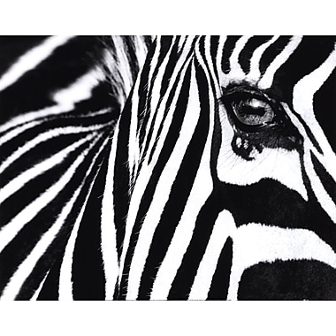 Evive Designs ''Black and White II'' by Rocco Sette Photographic Print