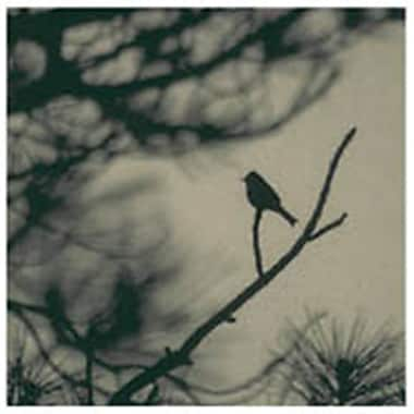 Evive Designs Caligraphy Bird I by Elena Ray Photographic Print