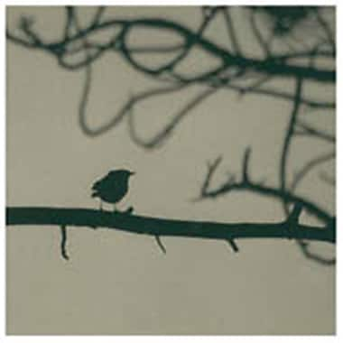 Evive Designs Caligraphy Bird II by Elena Ray Photographic Print
