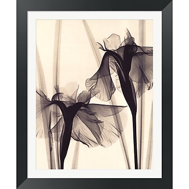 Evive Designs Japanese Iris by Judith Mcmillan Framed Graphic Art