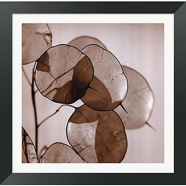 Evive Designs Silver Dollars by Ann Dahlgren Framed Photographic Print