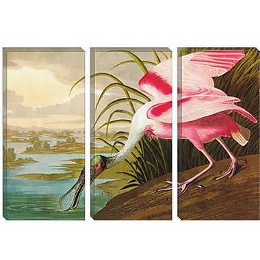 iCanvas 'Roseate Spoonbill' by John James Audubon Graphic Art on Canvas; 12'' H x 18'' W x 0.75'' D