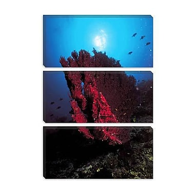 iCanvas Marine and Ocean Coral Photographic Print on Canvas; 40'' H x 26'' W x 0.75'' D
