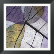 Evive Designs Purple and Grey Leaves II by Jim Christensen Framed Photographic Print