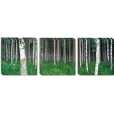 iCanvas Panoramic Birch Forest, Punkaharju, Finland Photographic Print on Canvas