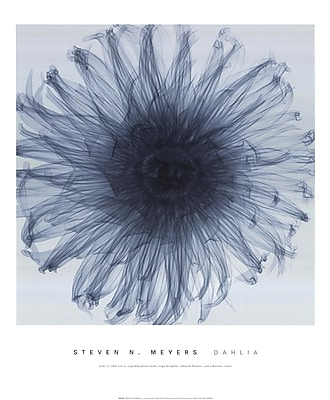 Evive Designs Dahlia by Steven N. Meyers Photographic Print