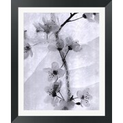 Evive Designs Cherry Blossoms in Winter by Ryuijie Framed Photographic Print