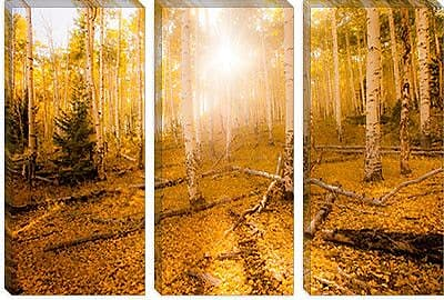 iCanvas 'Fall Light' by Dan Ballard Photographic Print on Canvas; 12'' H x 18'' W x 0.75'' D