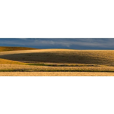 iCanvas Panoramic Wheat Field, Palouse, Washington State Photographic Print on Wrapped Canvas